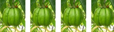 Meet that 2015 weight goal - Garcinia cambogia for weight loss